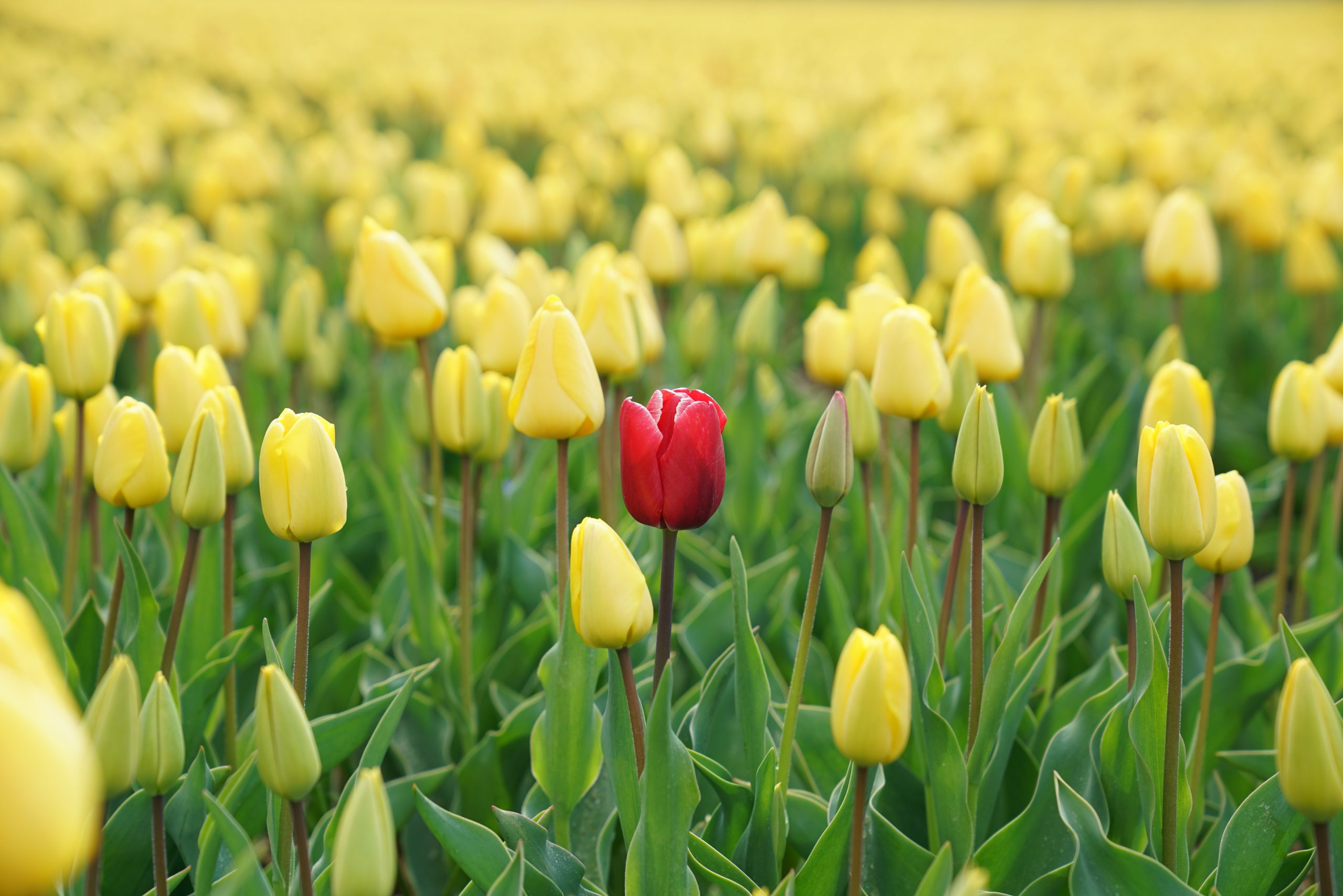 March Value Focus: Individuality